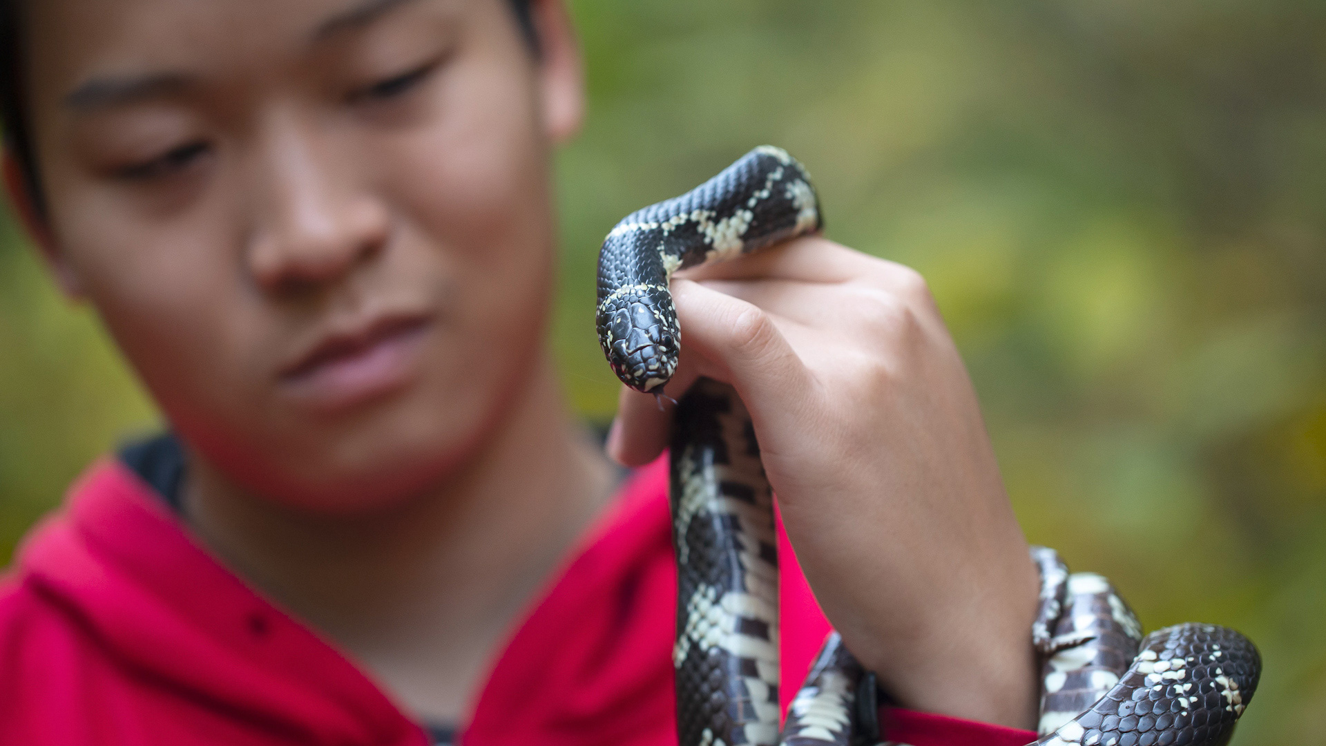 UMD Student Justin Lee Discovers New Species Through Herpetology Research. This is a picture of him holding a snake.