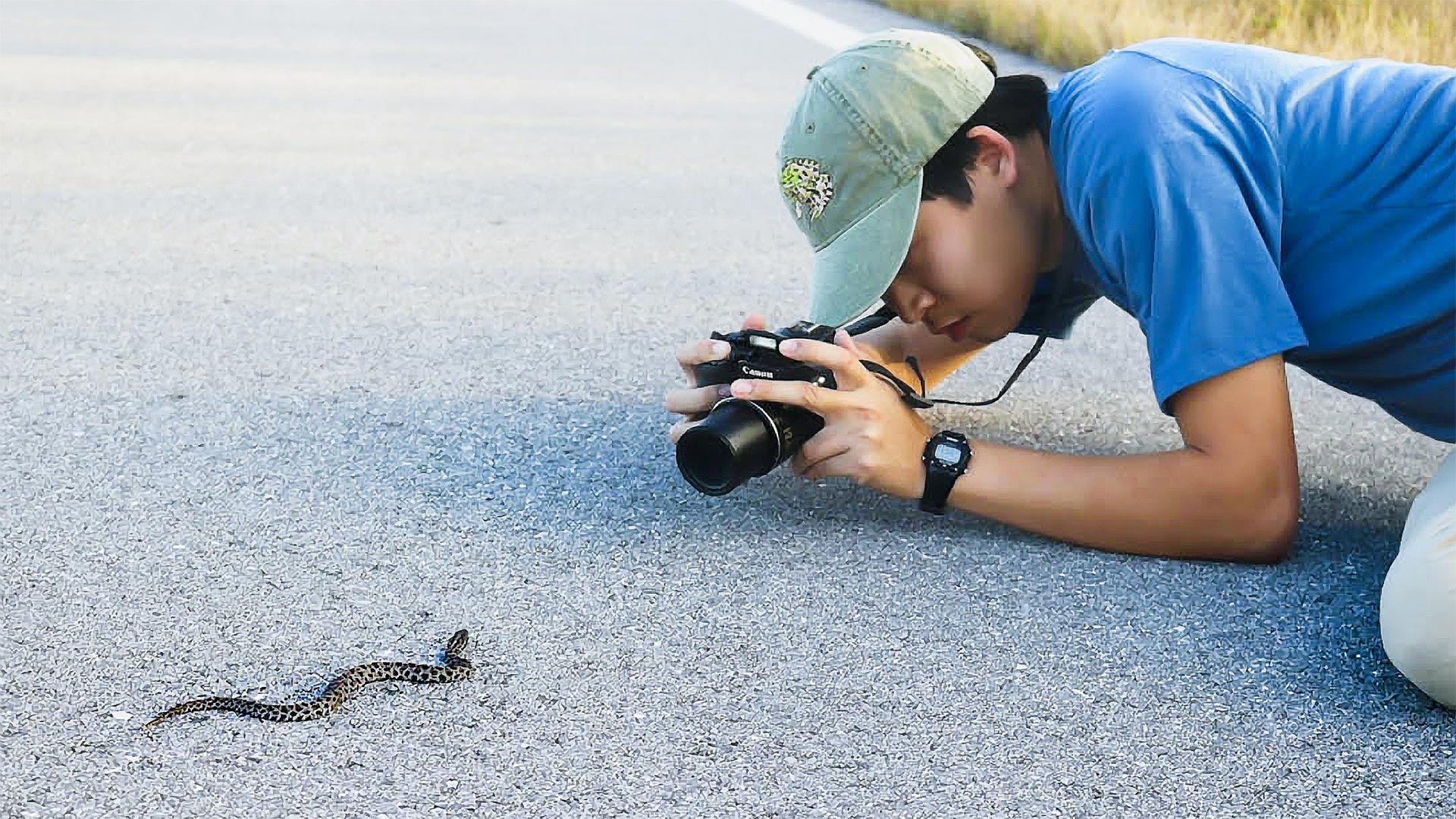 Justin Lee photographs a pygmy rattlesnake. Lee, who works in a herpetology lab at the Smithsonian (below), has published nine research papers as a first author. (Pygmy rattlesnake photo by David Lee; Smithsonian photo, below, by Harry W. Greene)