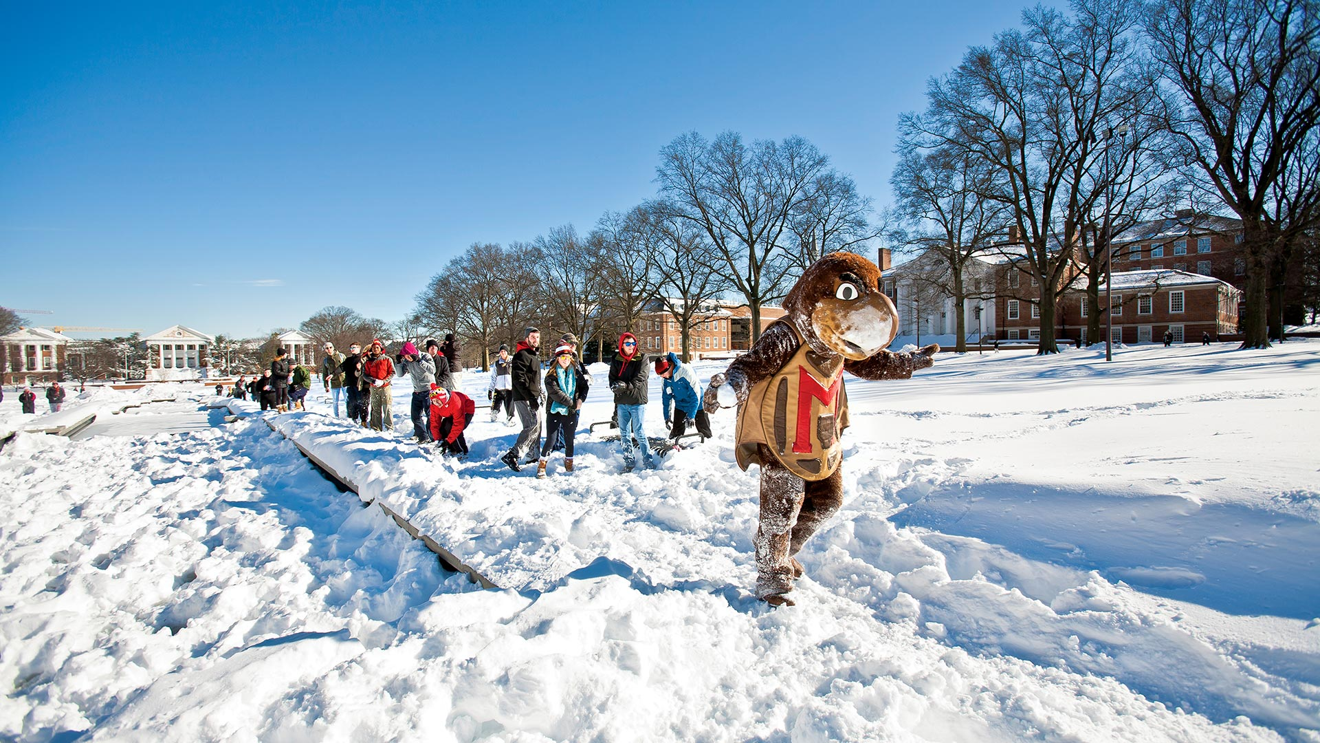 Testudo playing in the snow with students